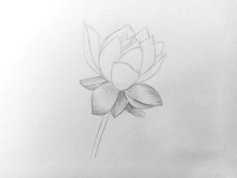 Как нарисовать цветок карандашом? Поэтапный урок. Шаг 9. Портреты карандашом - Fenlin.ru