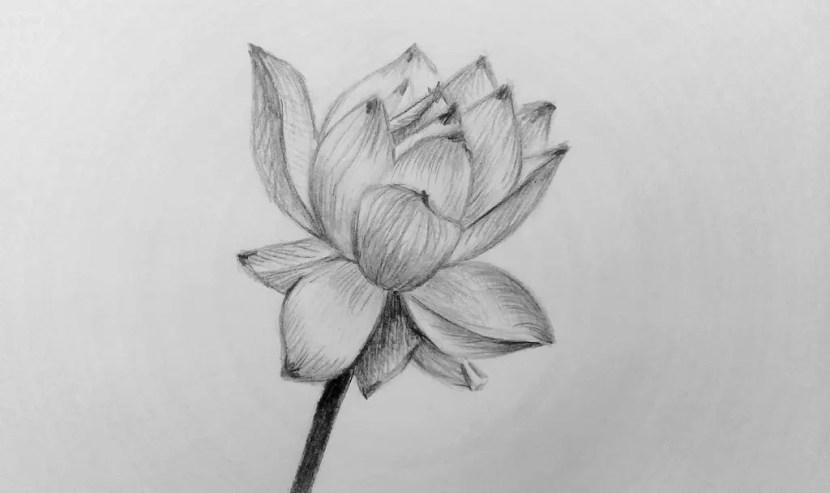 карандашом картинки цветы