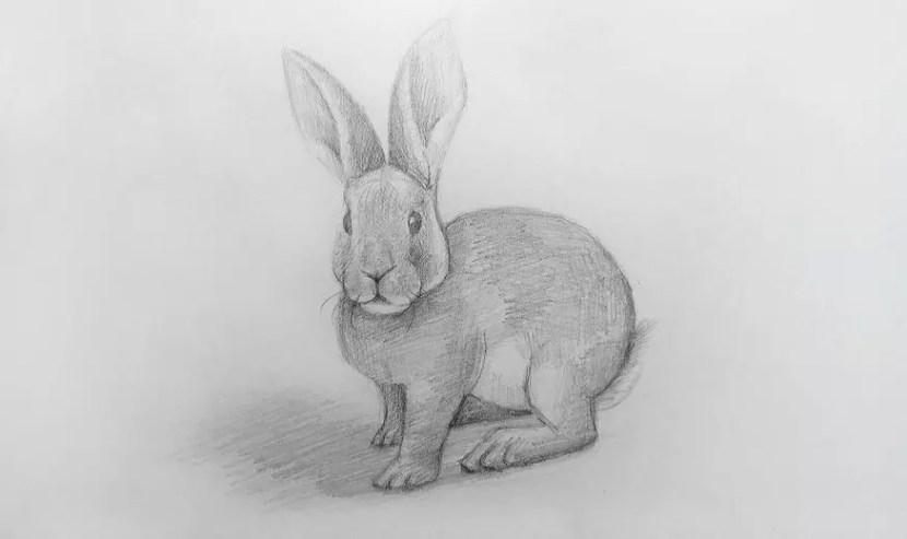 Как нарисовать кролика карандашом? Шаг 1. Поэтапный урок. Портреты карандашом - Fenlin.ru