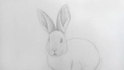 Как нарисовать кролика карандашом? Шаг 12. Портреты карандашом - Fenlin.ru