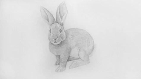 Как нарисовать кролика карандашом? Шаг 17. Портреты карандашом - Fenlin.ru