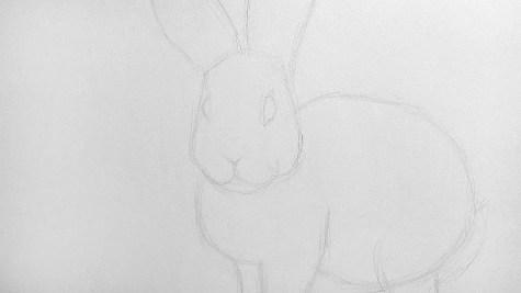 Как нарисовать кролика карандашом? Шаг 9. Портреты карандашом - Fenlin.ru