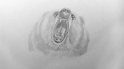 Как нарисовать медведя карандашом? Шаг 14. Портреты карандашом - Fenlin.ru