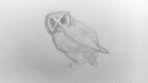 Как нарисовать сову карандашом? Шаг 10. Портреты карандашом - Fenlin.ru