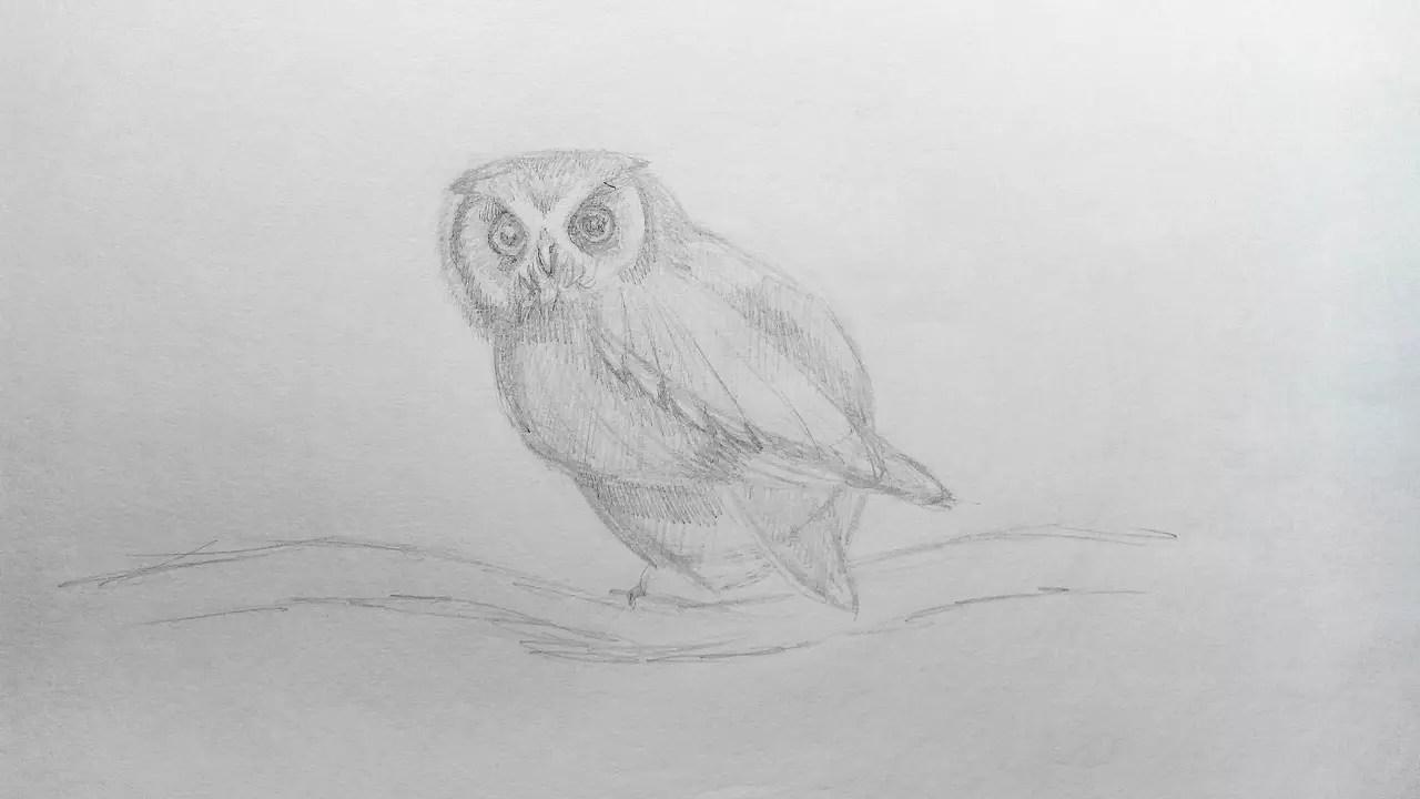 Как нарисовать сову карандашом? Шаг 12. Портреты карандашом - Fenlin.ru