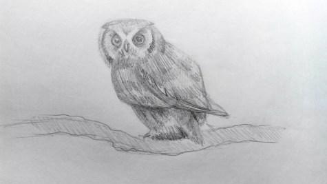 Как нарисовать сову карандашом? Шаг 15. Портреты карандашом - Fenlin.ru