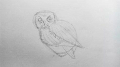 Как нарисовать сову карандашом? Шаг 7. Портреты карандашом - Fenlin.ru