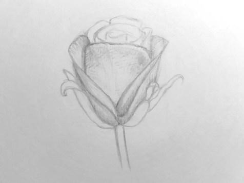 Как нарисовать розу карандашом для детей? Шаг 11. Портреты карандашом - Fenlin.ru