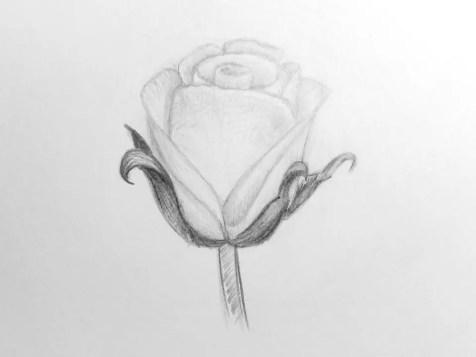 Как нарисовать розу карандашом для детей? Шаг 14. Портреты карандашом - Fenlin.ru