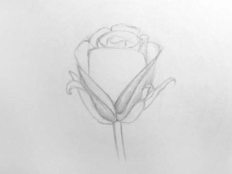 Как нарисовать розу карандашом для детей? Шаг 9. Портреты карандашом - Fenlin.ru