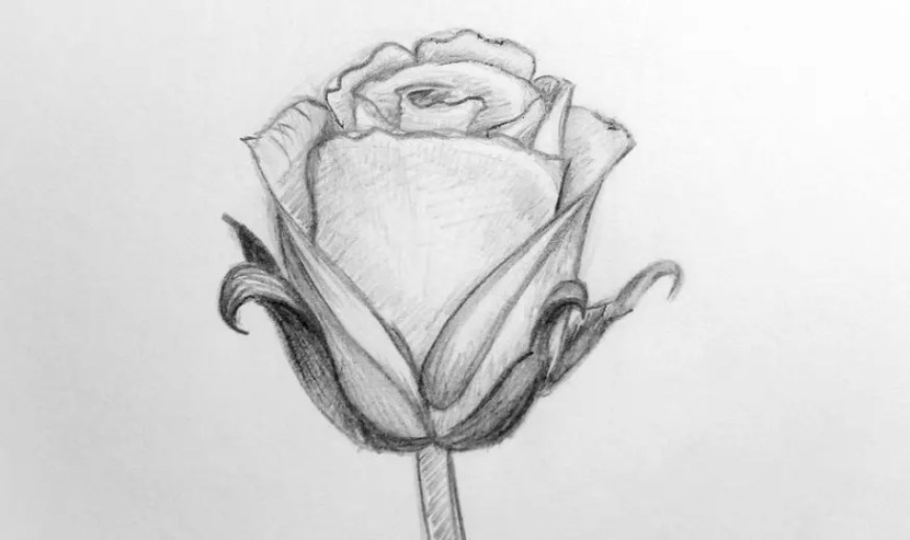 Как нарисовать розу карандашом для детей?. Портреты карандашом - Fenlin.ru