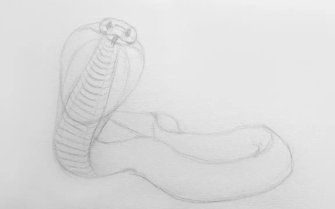 Как нарисовать кобру карандашом? Шаг 6. Портреты карандашом - Fenlin.ru