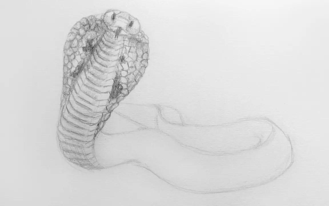 Как нарисовать кобру карандашом? Шаг 9. Портреты карандашом - Fenlin.ru