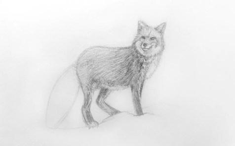 Как нарисовать лису карандашом для детей. Шаг 10. Портреты карандашом - Fenlin.ru