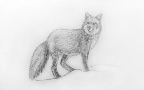 Как нарисовать лису карандашом для детей. Шаг 11. Портреты карандашом - Fenlin.ru