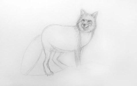 Как нарисовать лису карандашом для детей. Шаг 7. Портреты карандашом - Fenlin.ru