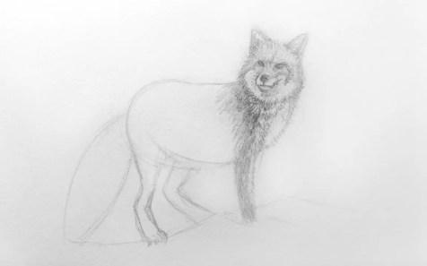 Как нарисовать лису карандашом для детей. Шаг 8. Портреты карандашом - Fenlin.ru