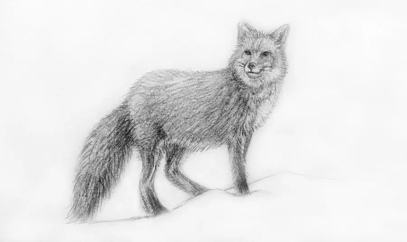 Как нарисовать лису карандашом для детей. Портреты карандашом - Fenlin.ru