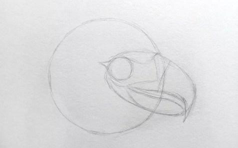 Как нарисовать орла карандашом? Шаг 4. Портреты карандашом - Fenlin.ru