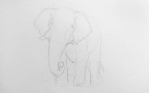 Как нарисовать слона карандашом? Шаг 6. Портреты карандашом - Fenlin.ru