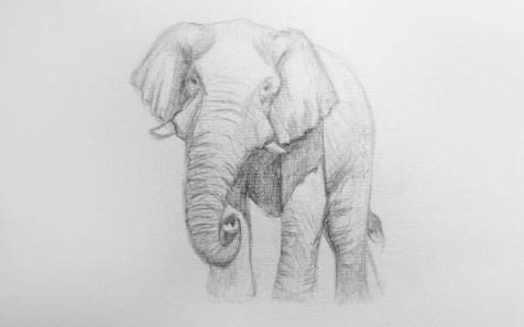 Как нарисовать слона карандашом? Шаг 9. Портреты карандашом - Fenlin.ru