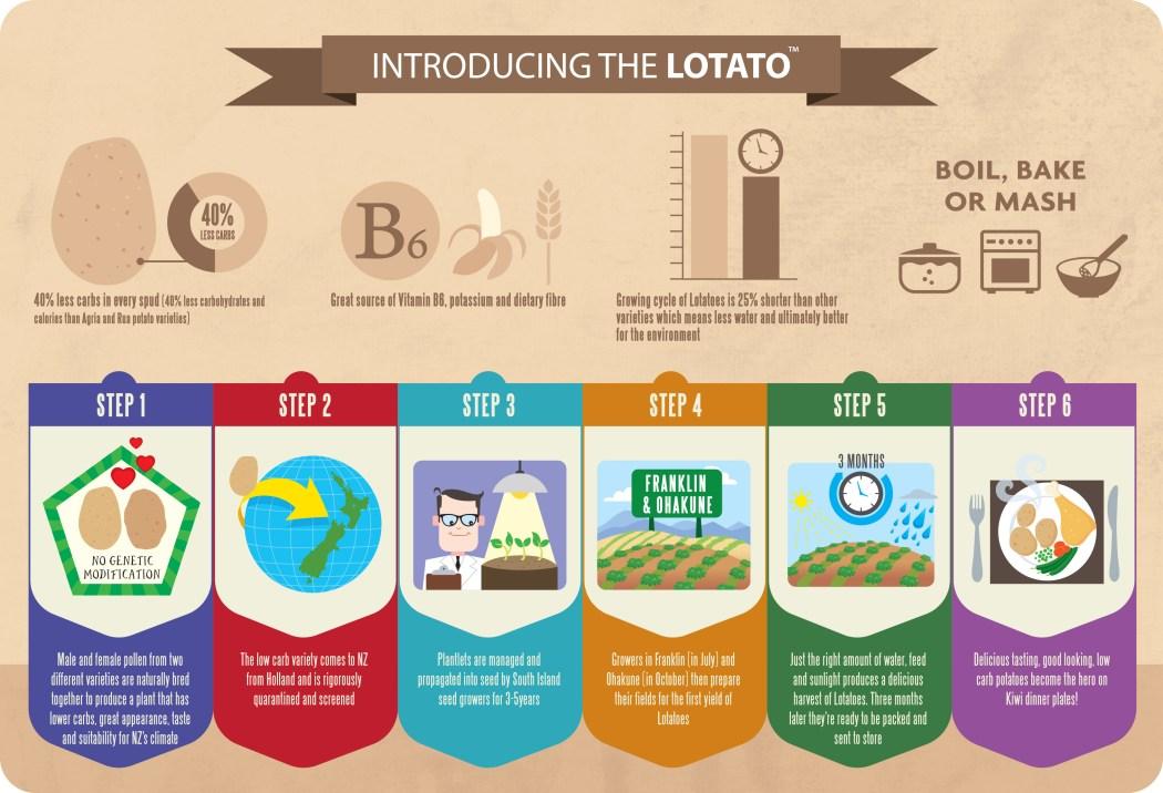 Lotatoe Infographics