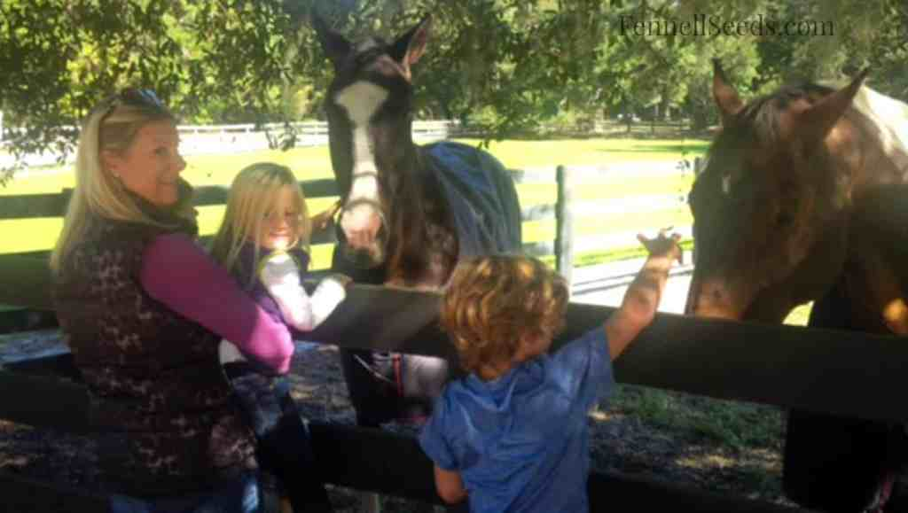 Visiting Dixie Petting Horses