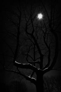 tree moonlight