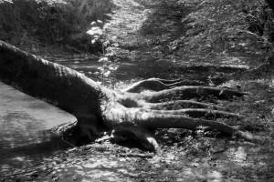 Creek Claw
