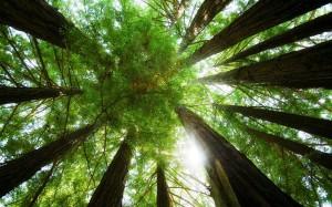Dense-Green-Treetop