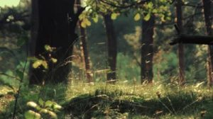 stock-footage-beautiful-woods-in-warm-sun-light-full-hd