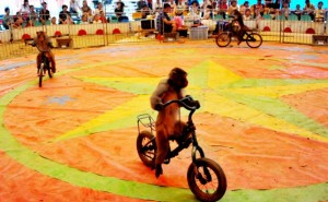 Circus Show In China