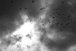 birds__swimming_in_the_dark_sky__processed___b_w__by_ozkc1-d6iixkd