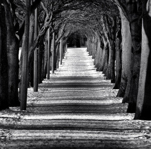 bw-tree-avenue