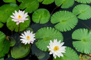 water-flowers-new