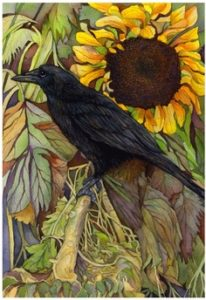raven-sunflower