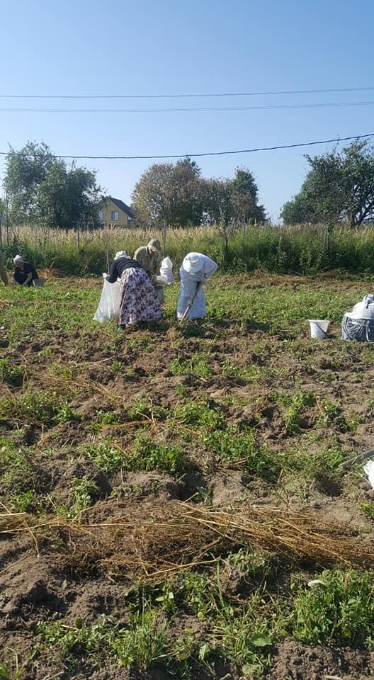 Урожай картошки 2019