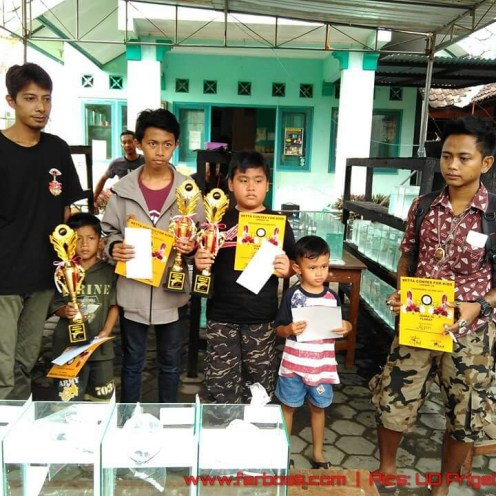 Pemenang betta contest for kids.jpg