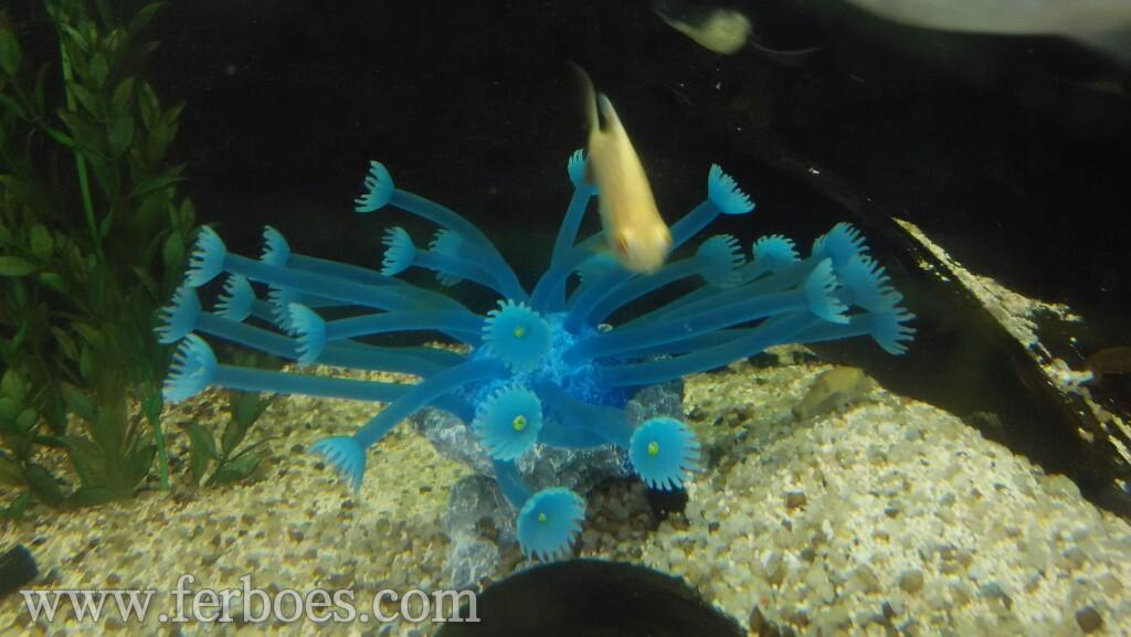 Dekorasi aquarium artificial coral for Aquarium katalog