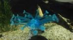 Artificial coral-1.jpg