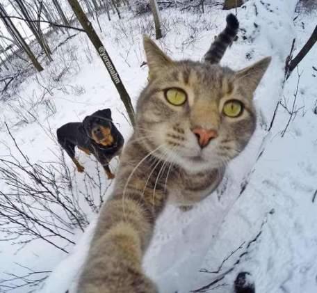 Kucing-selfie