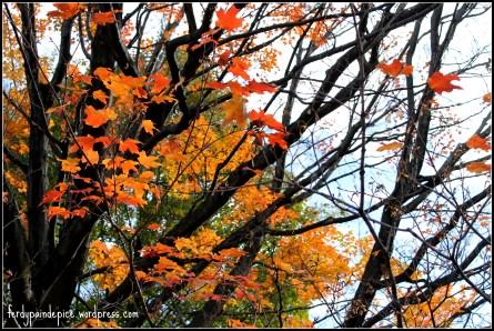 automne 9