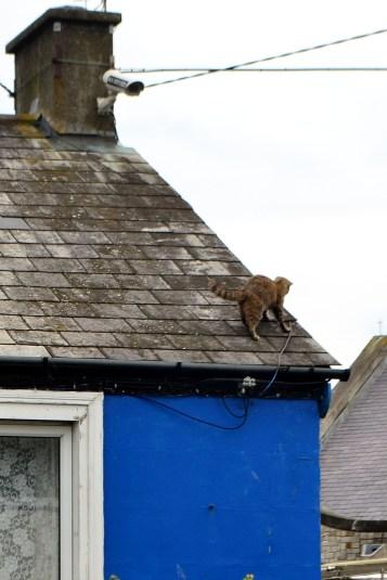 O pisică pe acoperișul...proaspăt plouat