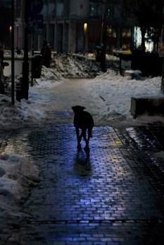 Winter scene in front of Cărturești Verona