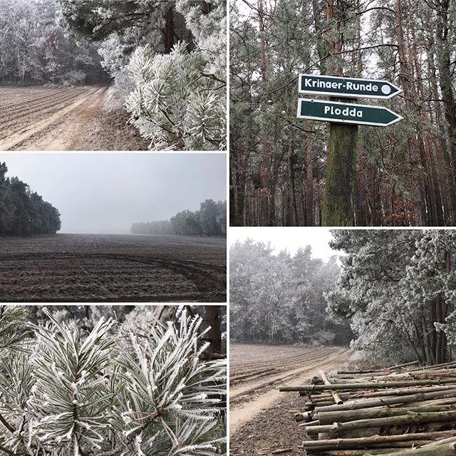 Der Nebel, der den Blick auf die Mondfinsternis 🌒 in einigen Regionen trübte, hat die Natur in eine zauberhafte weiße Hülle gepackt ️ #muldestausee #ferienhaushalbritter #ferienhauskrina #krina #dübenerheide #nebel #frost #winter