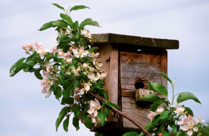 Apfelblüte im Südtirol © IDM Südtirol Frieder Blickle