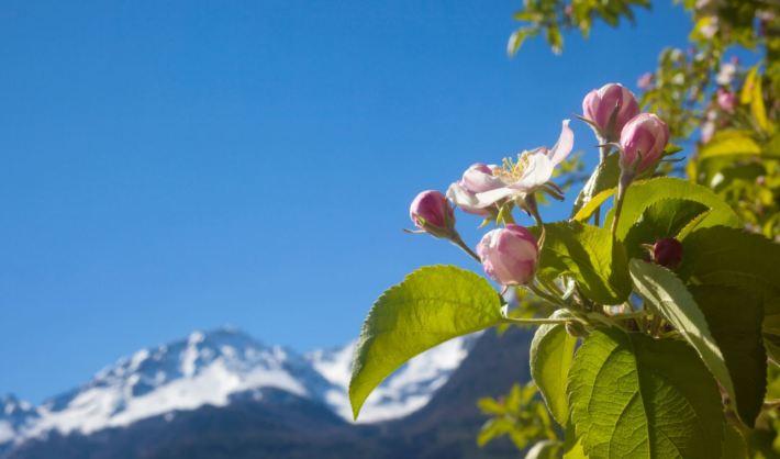 Frühlingsblumen © IDM Südtirol Frieder Blickle