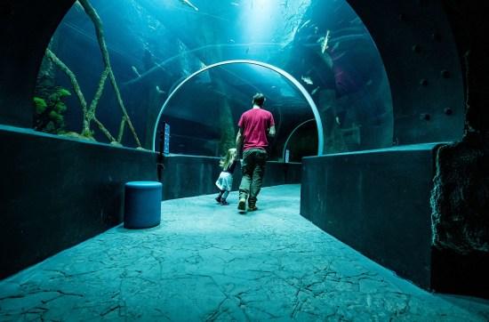 Aquatis Aquarium Vivarium, Tunnel © Nuno Acacio