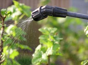 Болезни и вредители винограда: как защитить растение от ...