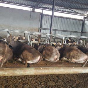 inek yatakları